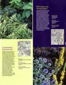 Left: 葉の形やパターンによりコントラストをつける。 Right: 淡い青の植物を入れ、色調(明度や彩度といったトーン)を和らげる。