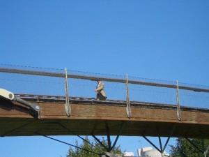 コンテンポラリーかつシンプルな歩道橋(ブリッジ)