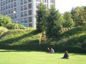 芝生の境界バッファー