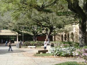 ルイジアナ州立大学の図書館前にあるQuadrangleと呼ばれる広場。Live Oaks(Quercus virginiana)の木が彫刻的で美しい。