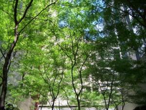 柔らかな光と緑 Paley Park