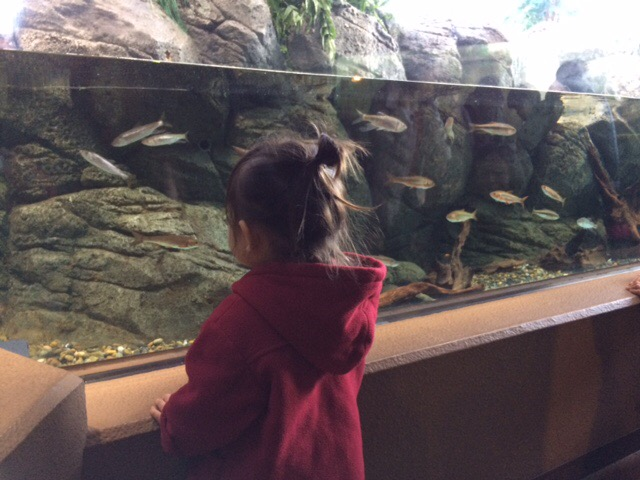 子供の目線での魚の展示。展示の高さは低くする。